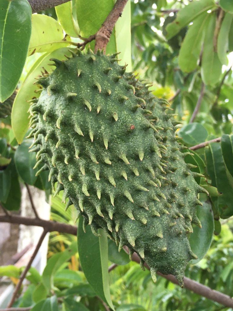Fruit Corossol