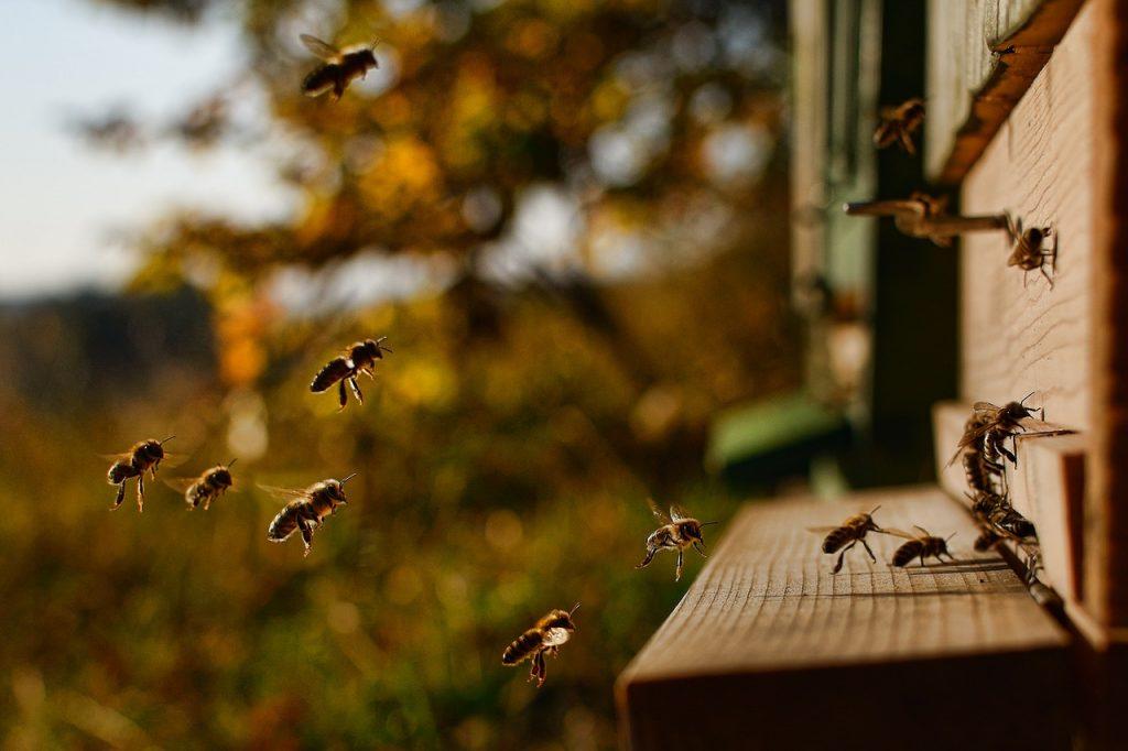 Emplacement des ruches