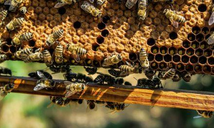 Las virtudes de la miel de tomillo