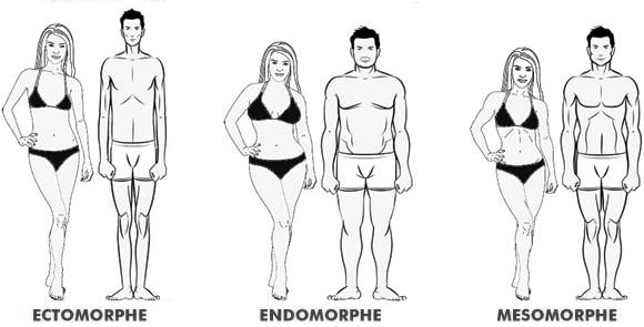 Les 3 morphotypes : ectomorhe, endomorphe et mésomorphe