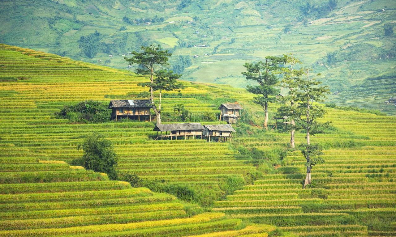Paysage de rizières