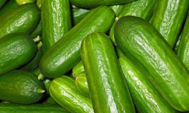 Le concombre : fruit ou légume ?
