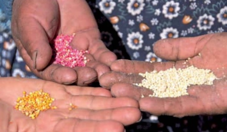 Le quinoa fait-il grossir