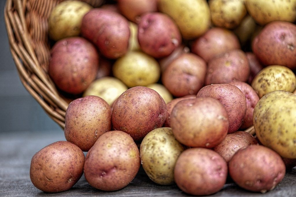 les pommes de terre sont des féculents