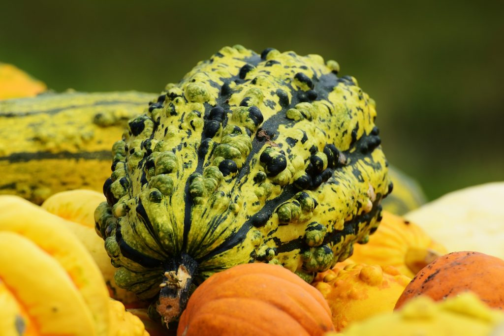 une courge